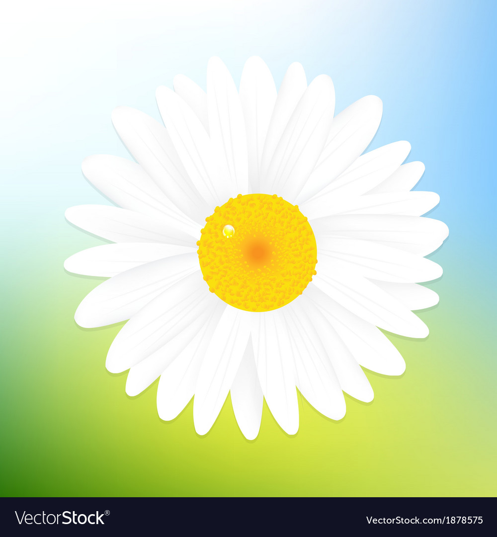 Camomile and sky vector | Price: 1 Credit (USD $1)