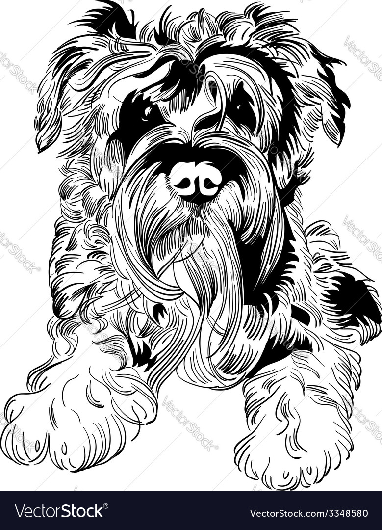Sweet dog miniature schnauzer breed hand drawing vector | Price: 1 Credit (USD $1)