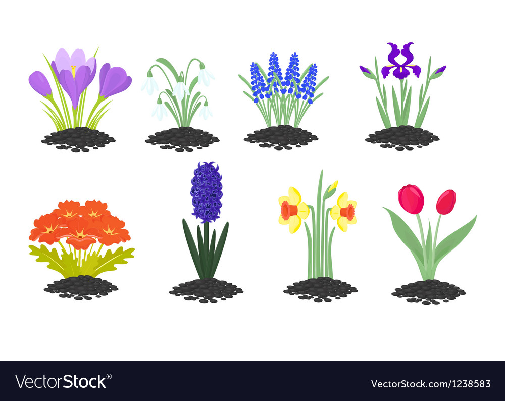 Spring is coming vector | Price: 1 Credit (USD $1)