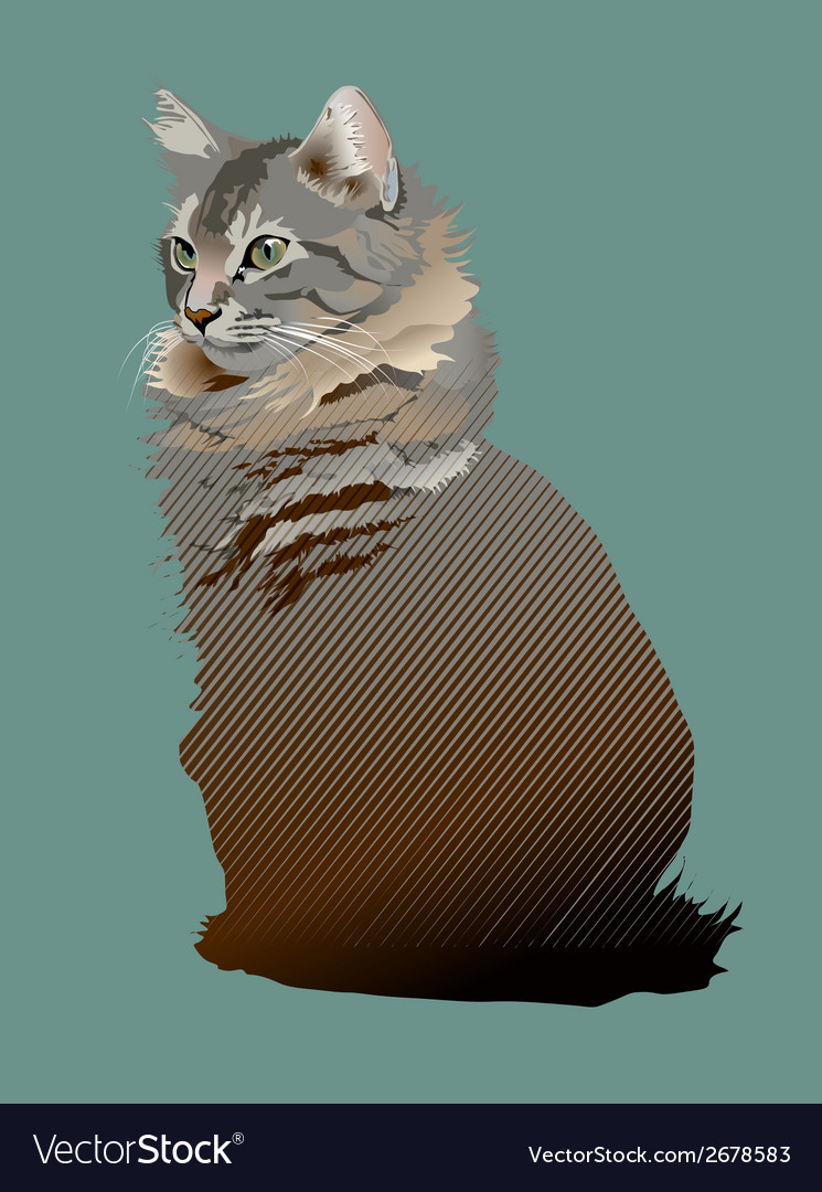 Young maine coon cat vector