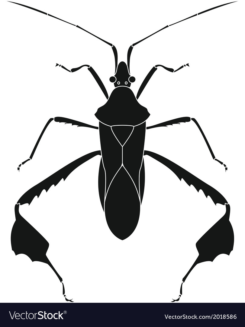 Life bug vector | Price: 1 Credit (USD $1)