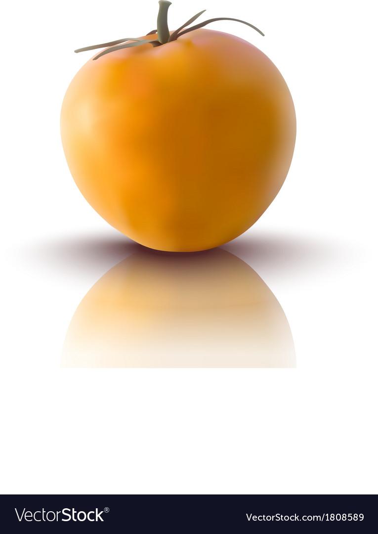 Yellow tomato vector | Price: 1 Credit (USD $1)