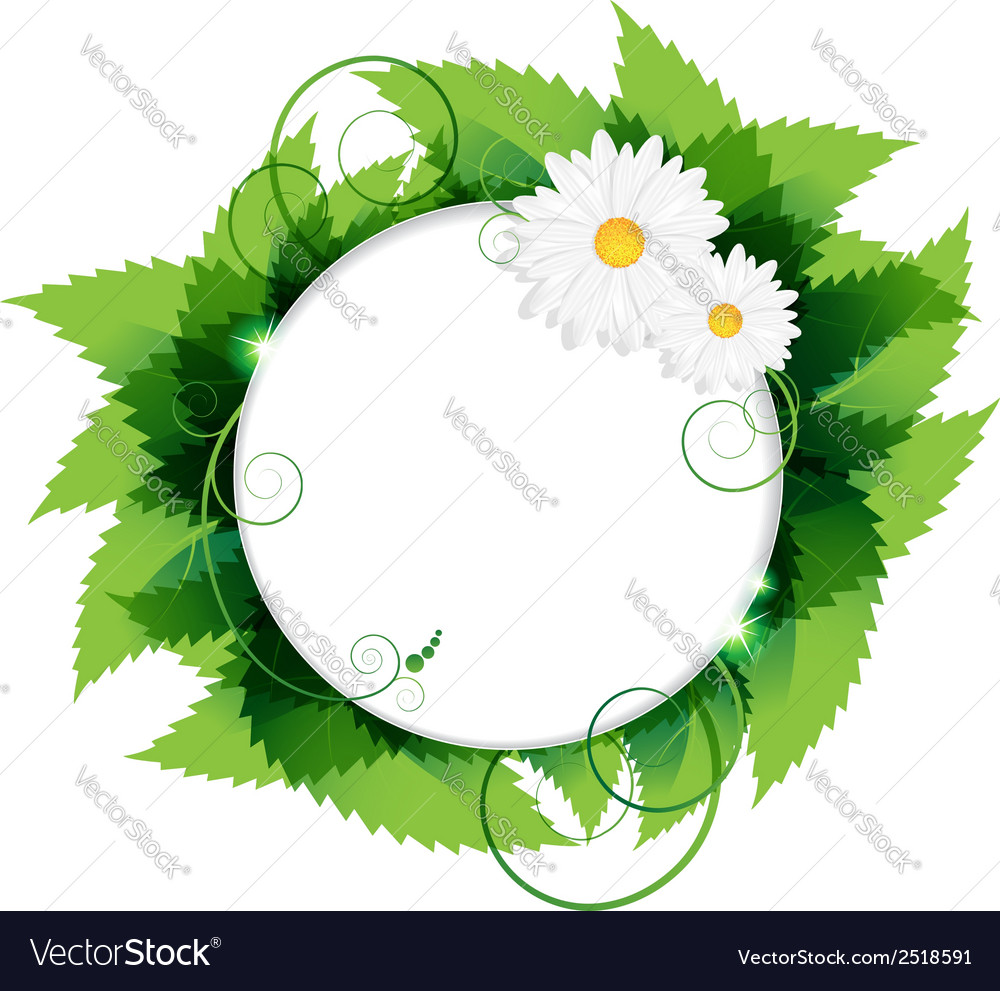 Daisies with leaves vector | Price: 1 Credit (USD $1)