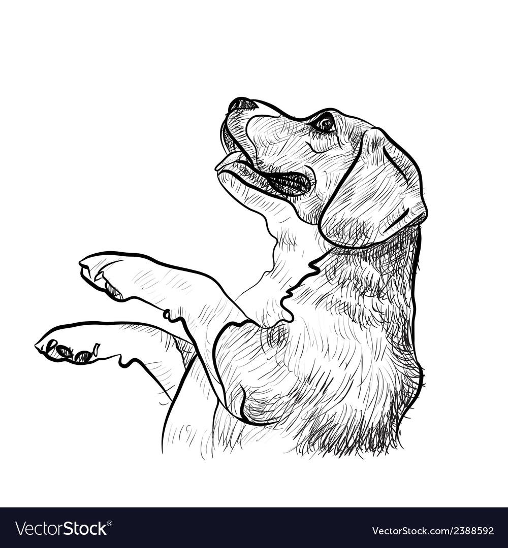 Beaglebegging for food vector | Price: 1 Credit (USD $1)
