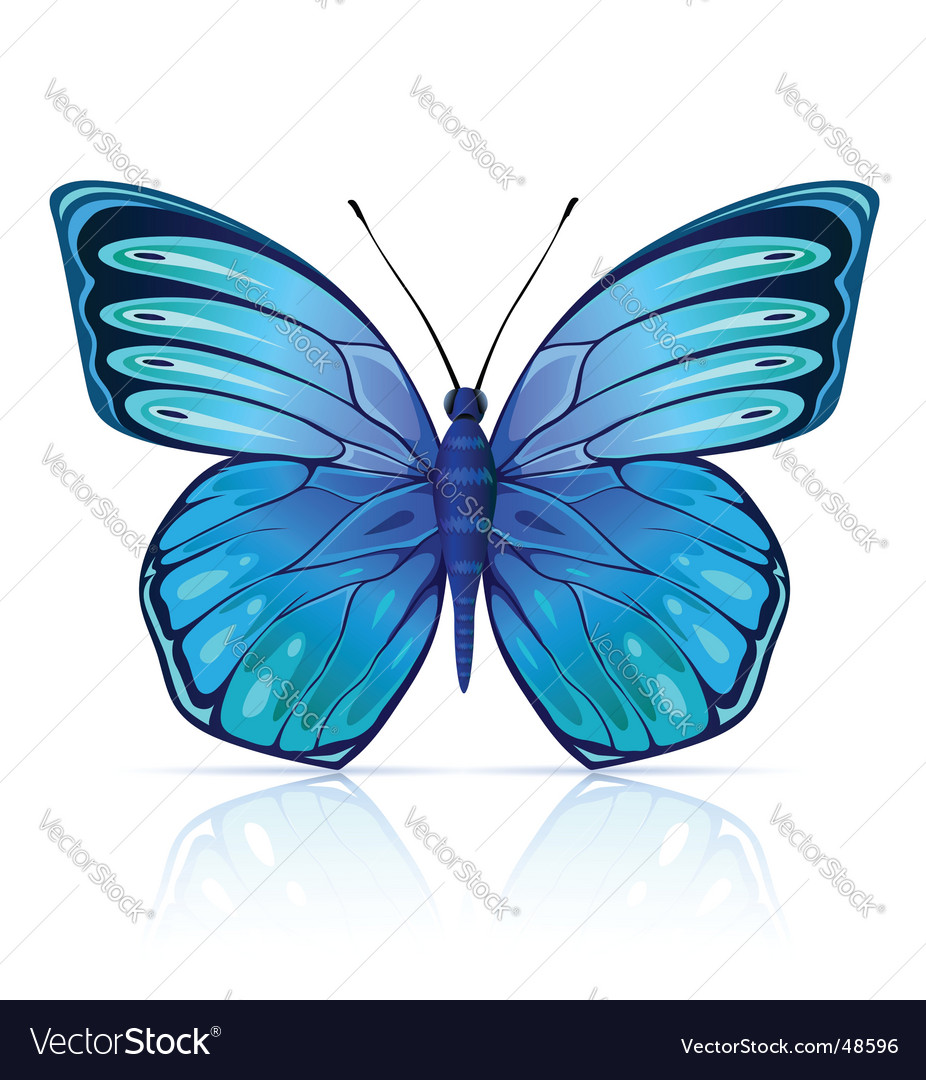 Butterfly insect isolated vector | Price: 1 Credit (USD $1)