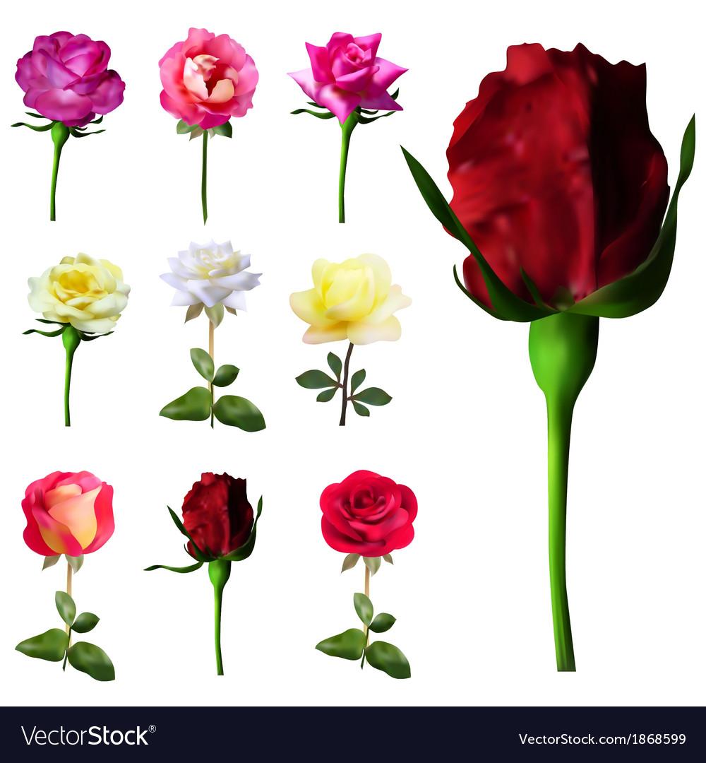 9 decorative roses vector | Price: 1 Credit (USD $1)