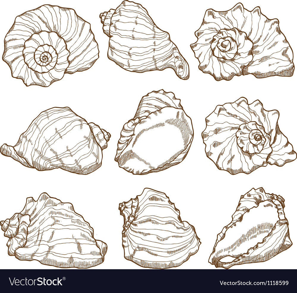 Hand drawing seashell set vector | Price: 1 Credit (USD $1)