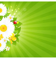 Bunch of flowers with grass and sunburst vector