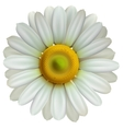 Chamomile flower eps10 vector