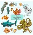 Sea creatures sketch colored vector