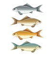 Set of live colour fish vector