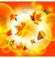 Autumn autumnal background beautiful beauty botany vector