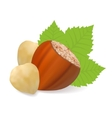 Filberts with leaves vector
