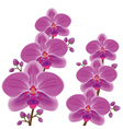 Exotic flower orchid vector