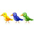 Three colourful birds vector