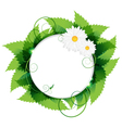 Daisies with leaves vector
