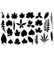Set of different leaves vector