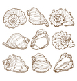 Hand drawing seashell set vector