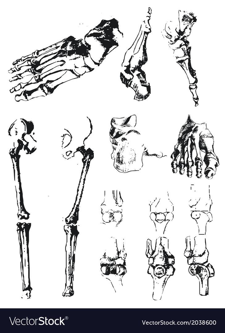 Bones vector | Price: 1 Credit (USD $1)