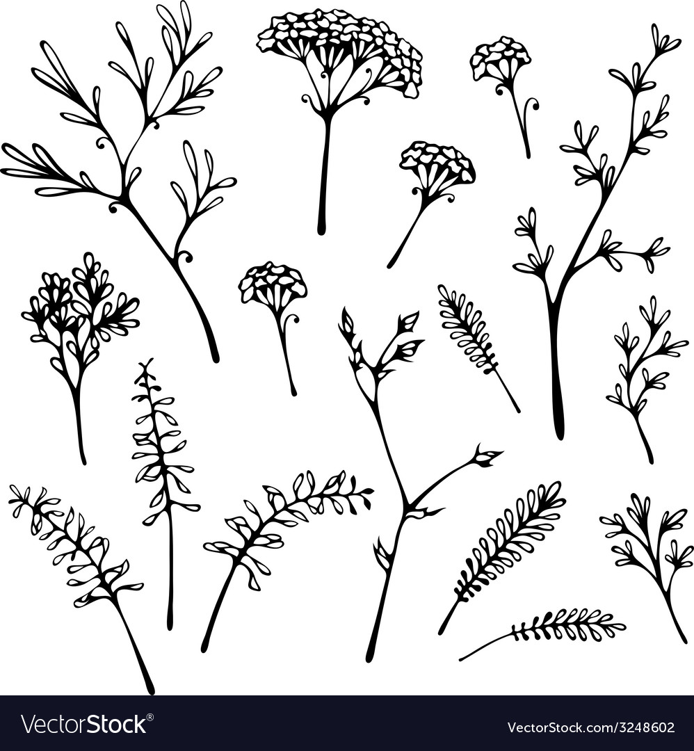 Set og grass silhouettes isolated on white vector | Price: 1 Credit (USD $1)