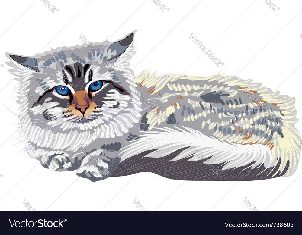Cat breed siberian cat vector | Price: 1 Credit (USD $1)