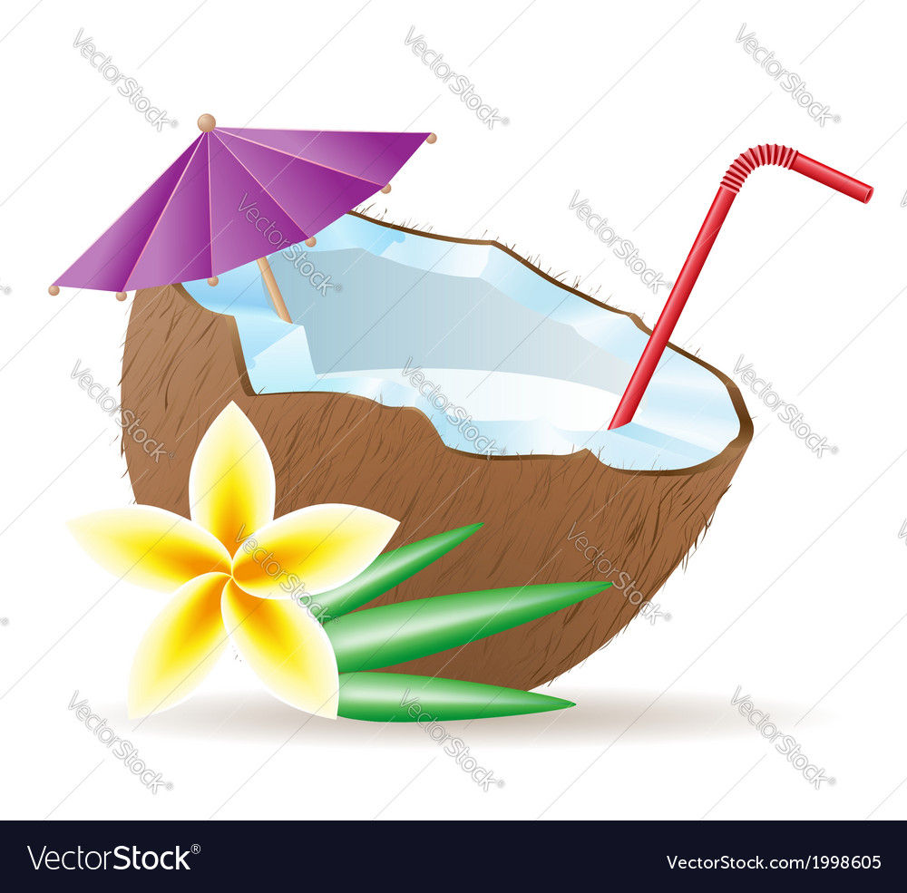 Coconut 05 vector | Price: 1 Credit (USD $1)