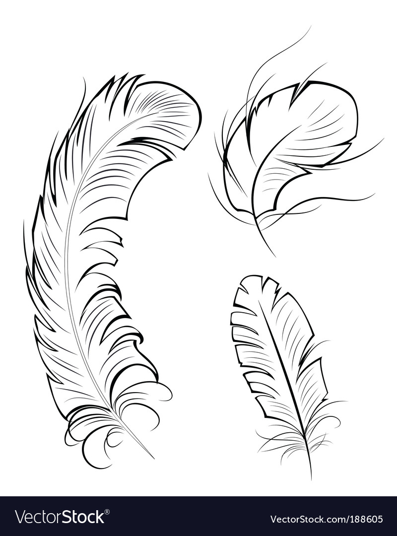 Three contour feathers vector | Price: 1 Credit (USD $1)