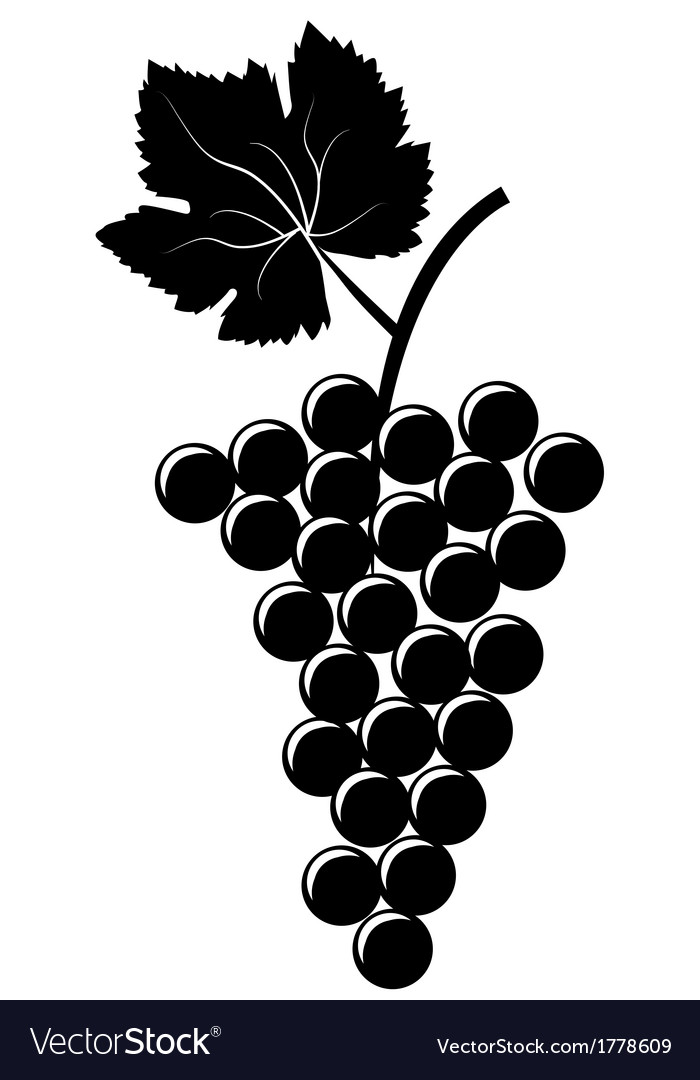 Bunch of grapes vector | Price: 1 Credit (USD $1)