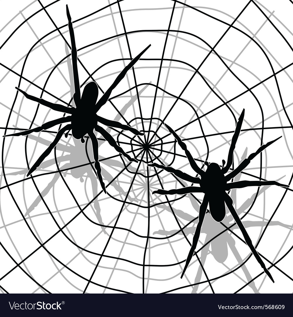 Spider network vector | Price: 1 Credit (USD $1)