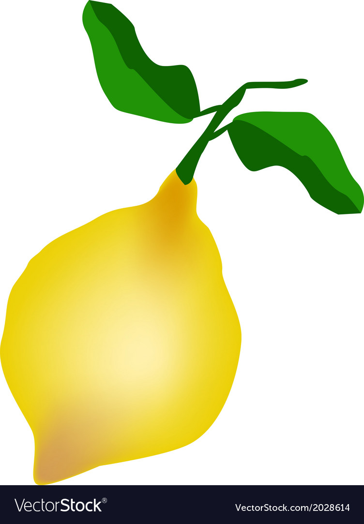 A fresh lemon on a white background vector | Price: 1 Credit (USD $1)