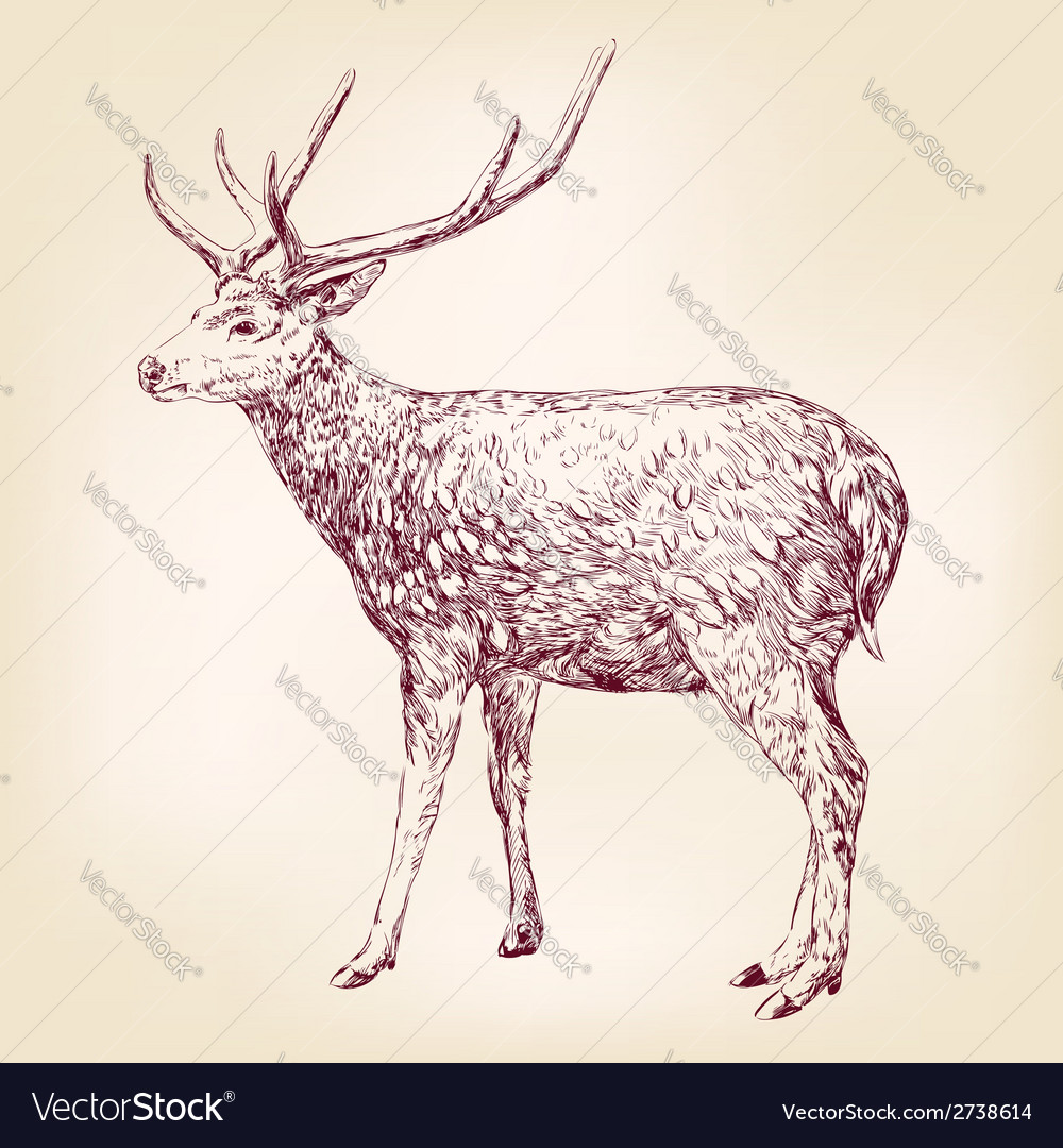 Deer hand drawn llustration realistic sketch vector | Price: 1 Credit (USD $1)