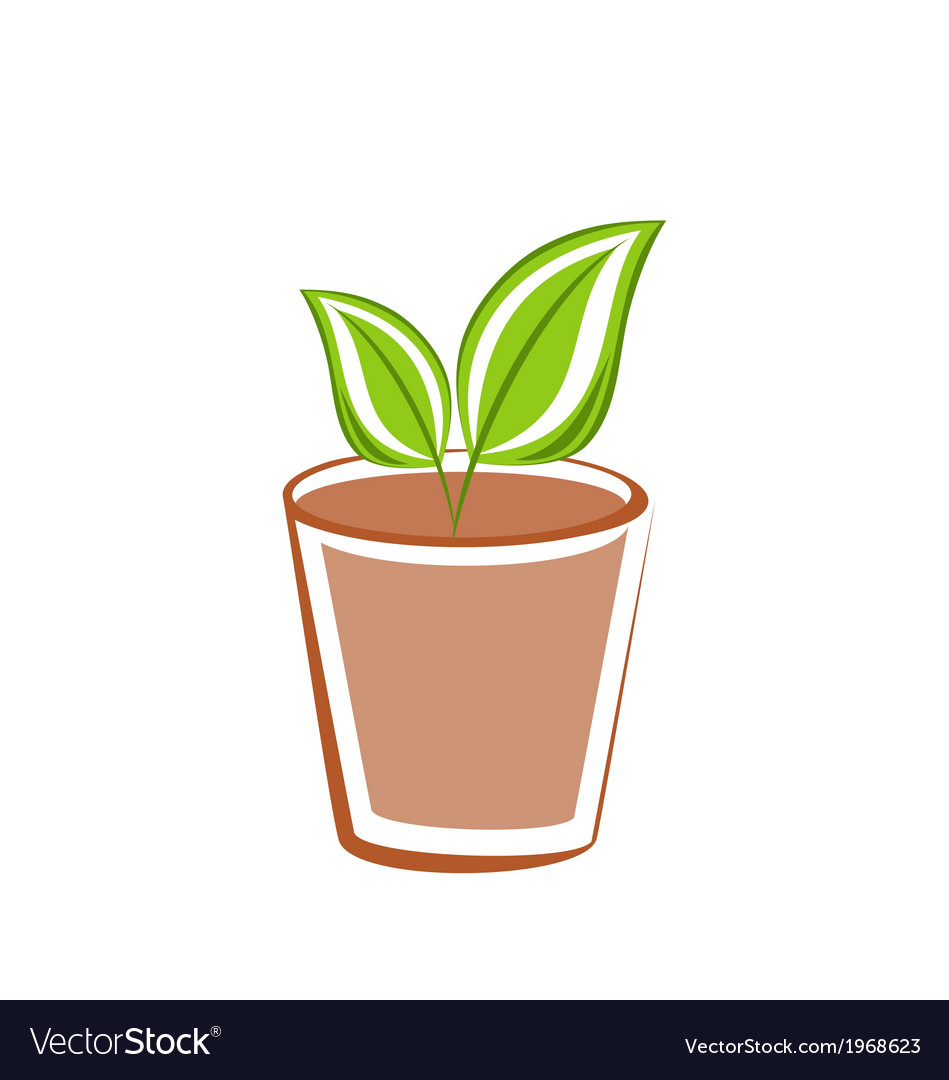Flowerpot with green leafs plants vector | Price: 1 Credit (USD $1)