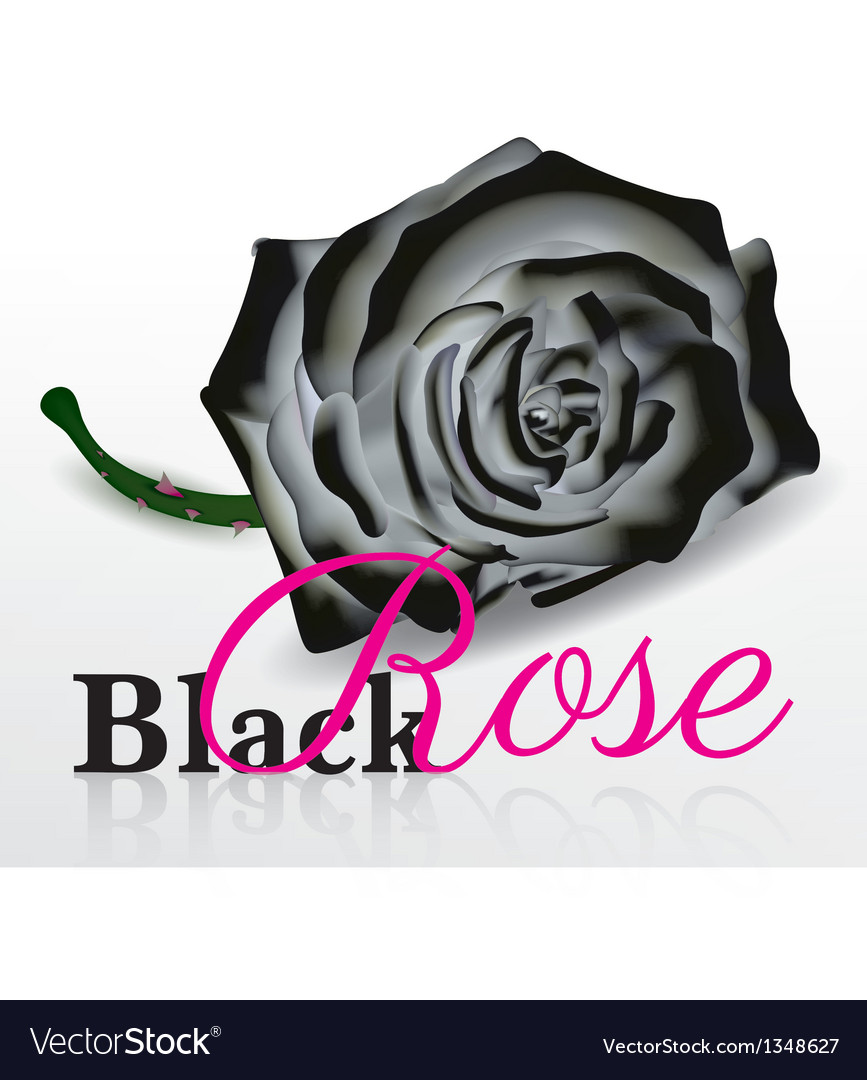 Black rose on white background vector | Price: 1 Credit (USD $1)