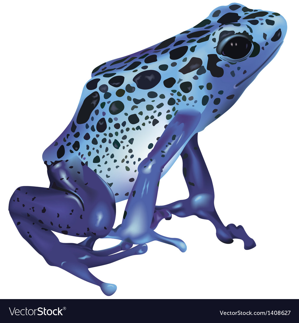 Poison frog vector | Price: 1 Credit (USD $1)
