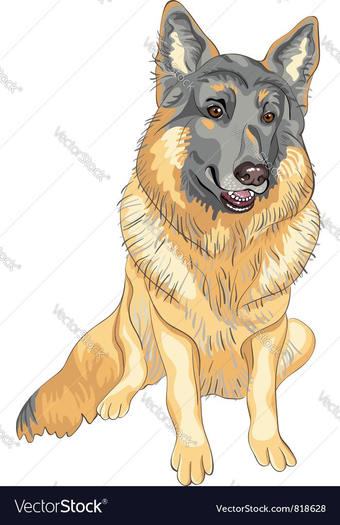Dog german shepherd breed smile vector | Price: 3 Credit (USD $3)