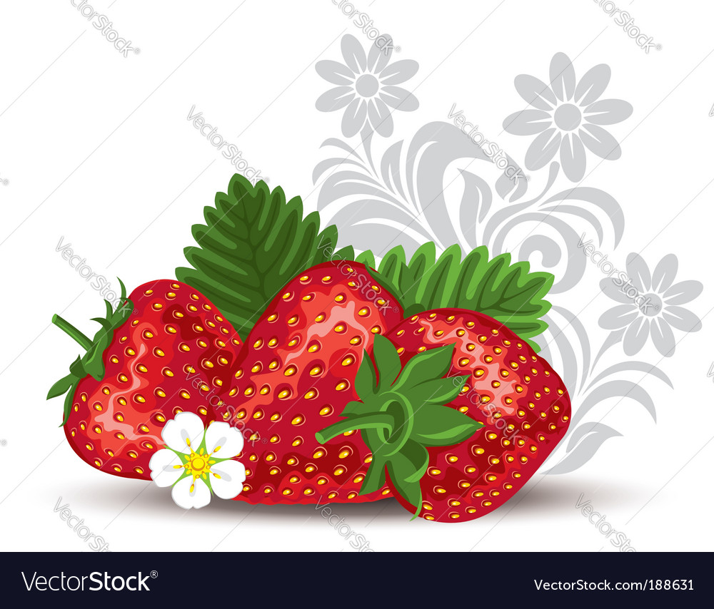 Strawberry with flowers and leaves vector | Price: 1 Credit (USD $1)