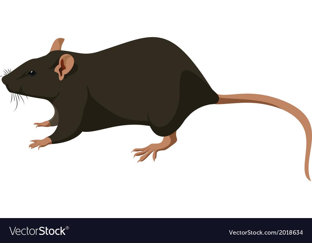 Rat nature vector | Price: 1 Credit (USD $1)