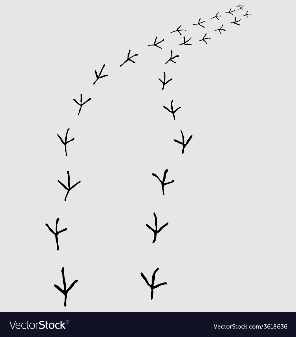 Trail of birds vector | Price: 1 Credit (USD $1)