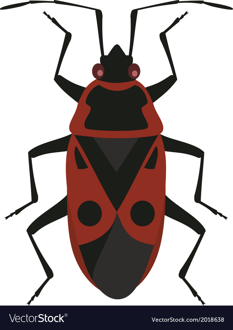 Red soldier bug vector | Price: 1 Credit (USD $1)
