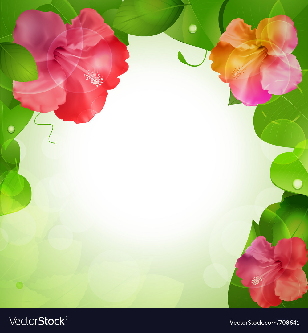 Hibiscus flowers vector | Price: 3 Credit (USD $3)