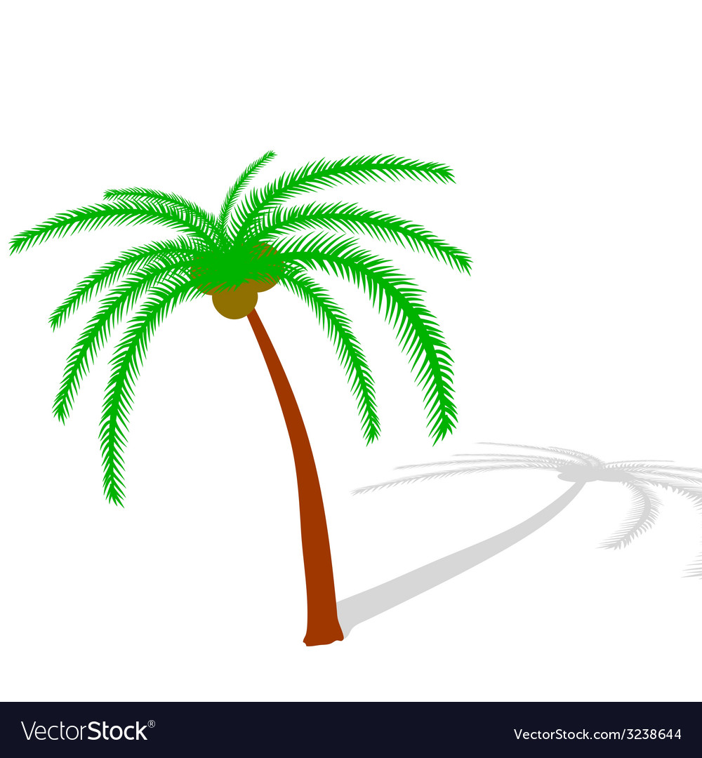 Palm tree on white vector | Price: 1 Credit (USD $1)