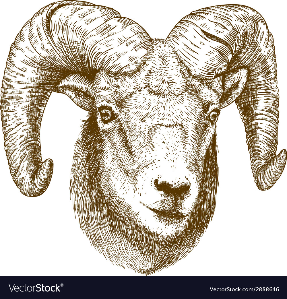 Engraving ram head vector | Price: 1 Credit (USD $1)