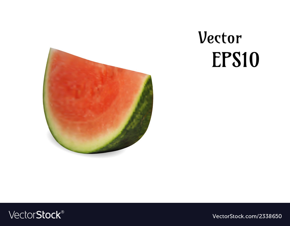 Realistic melon vector | Price: 1 Credit (USD $1)