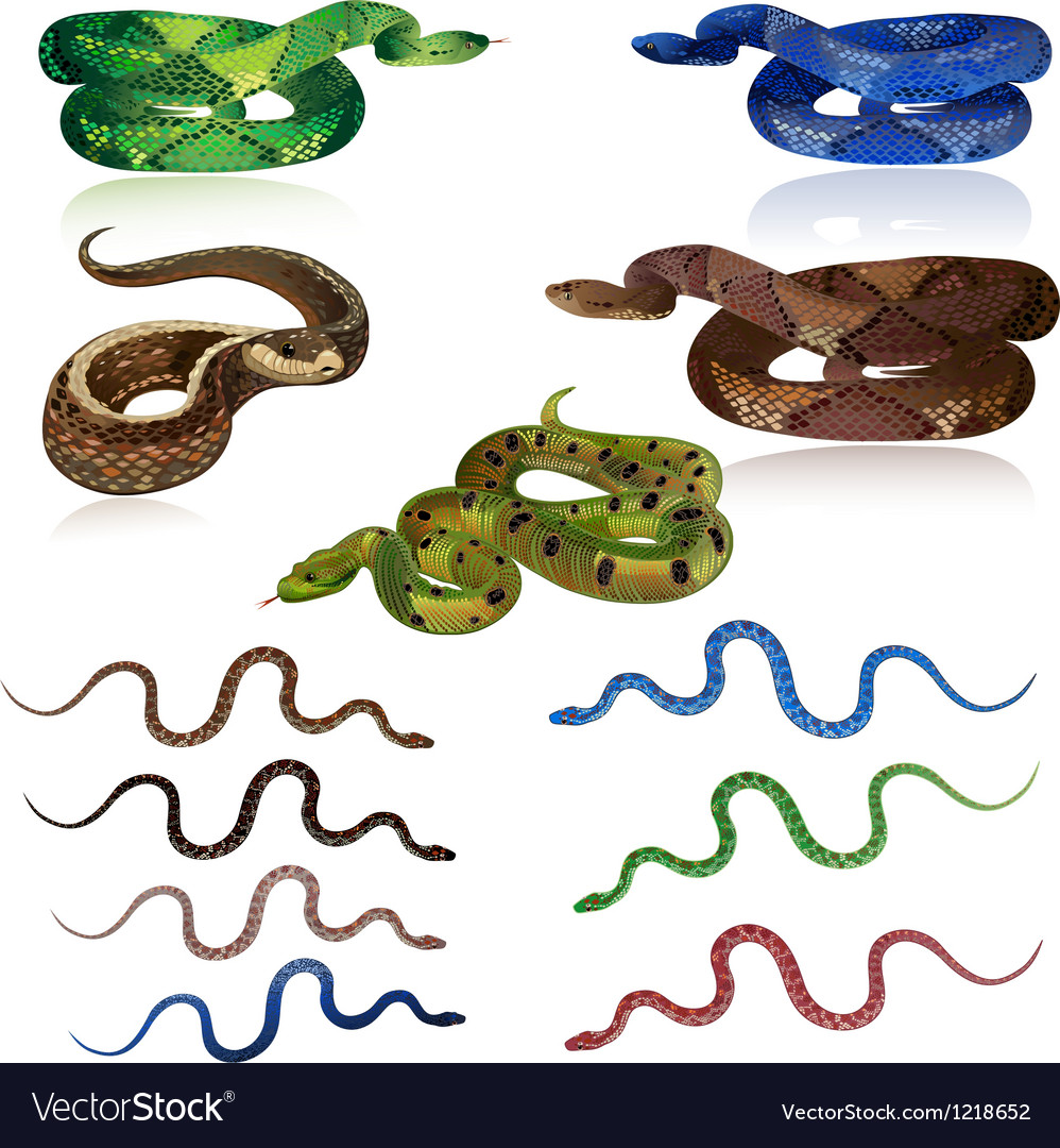 Snake set vector | Price: 1 Credit (USD $1)