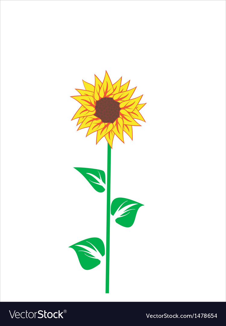 Beautiful sunflower vector | Price: 1 Credit (USD $1)