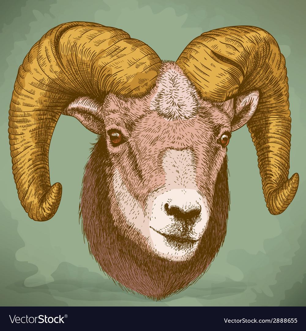 Engraving ram head retro vector   Price: 1 Credit (USD $1)