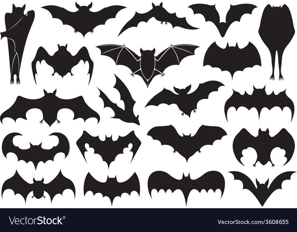Set of different bats vector | Price: 1 Credit (USD $1)
