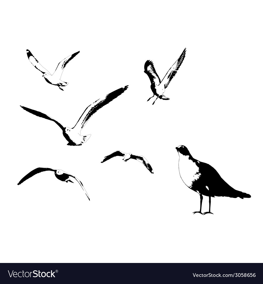Seagull vector | Price: 1 Credit (USD $1)