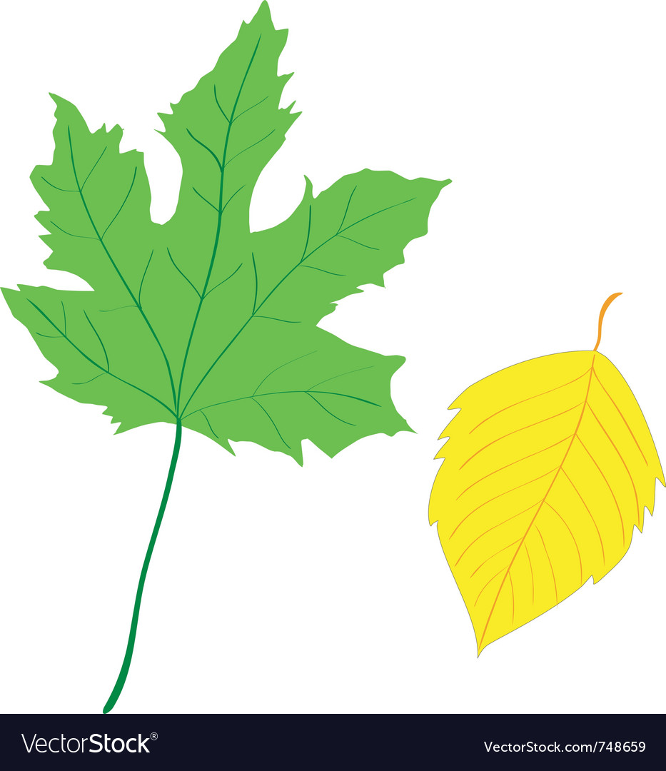 Decorative leaf vector | Price: 1 Credit (USD $1)