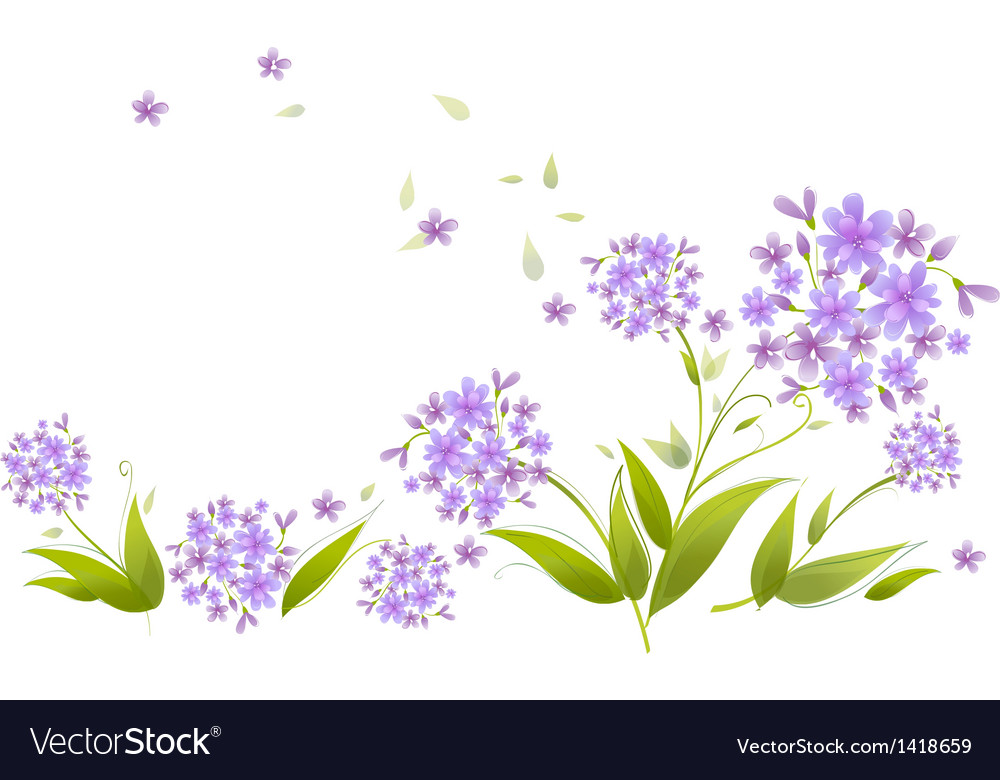 Spray blue agapanthus vector | Price: 1 Credit (USD $1)